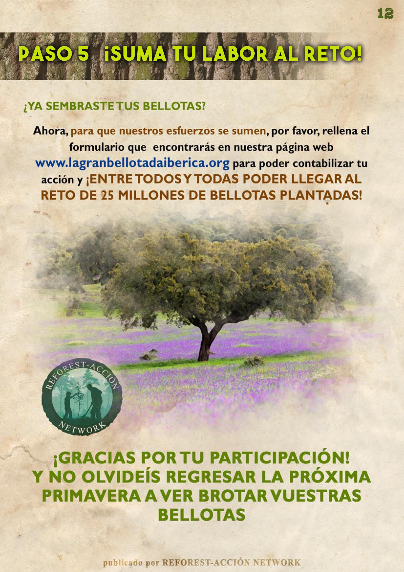 GUIA BELLOTERA - PAG 13