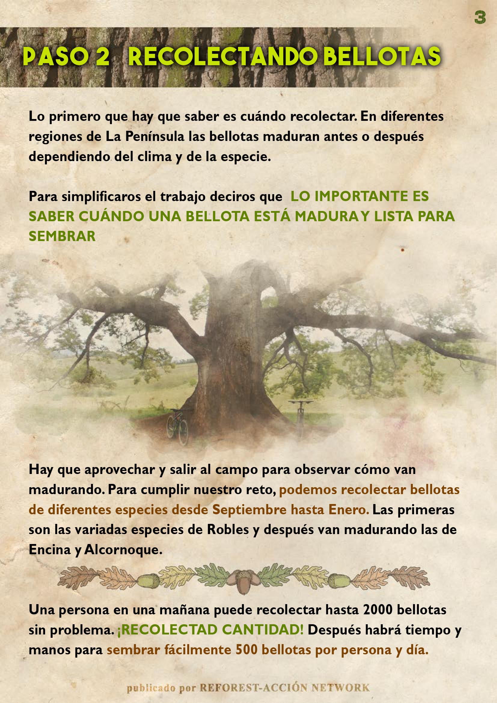 GUIA BELLOTERA - PAG 4