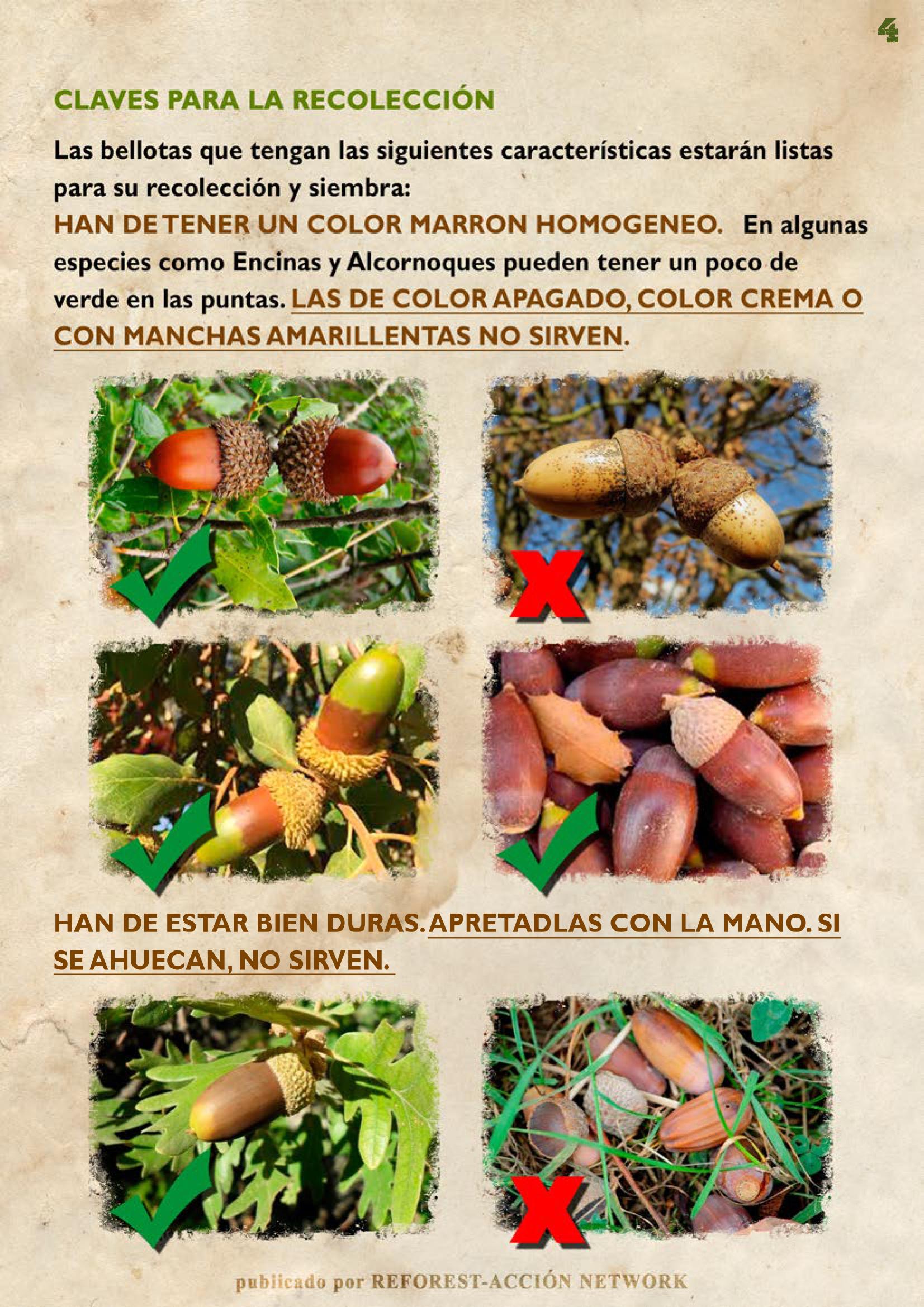 GUIA BELLOTERA - PAG 5
