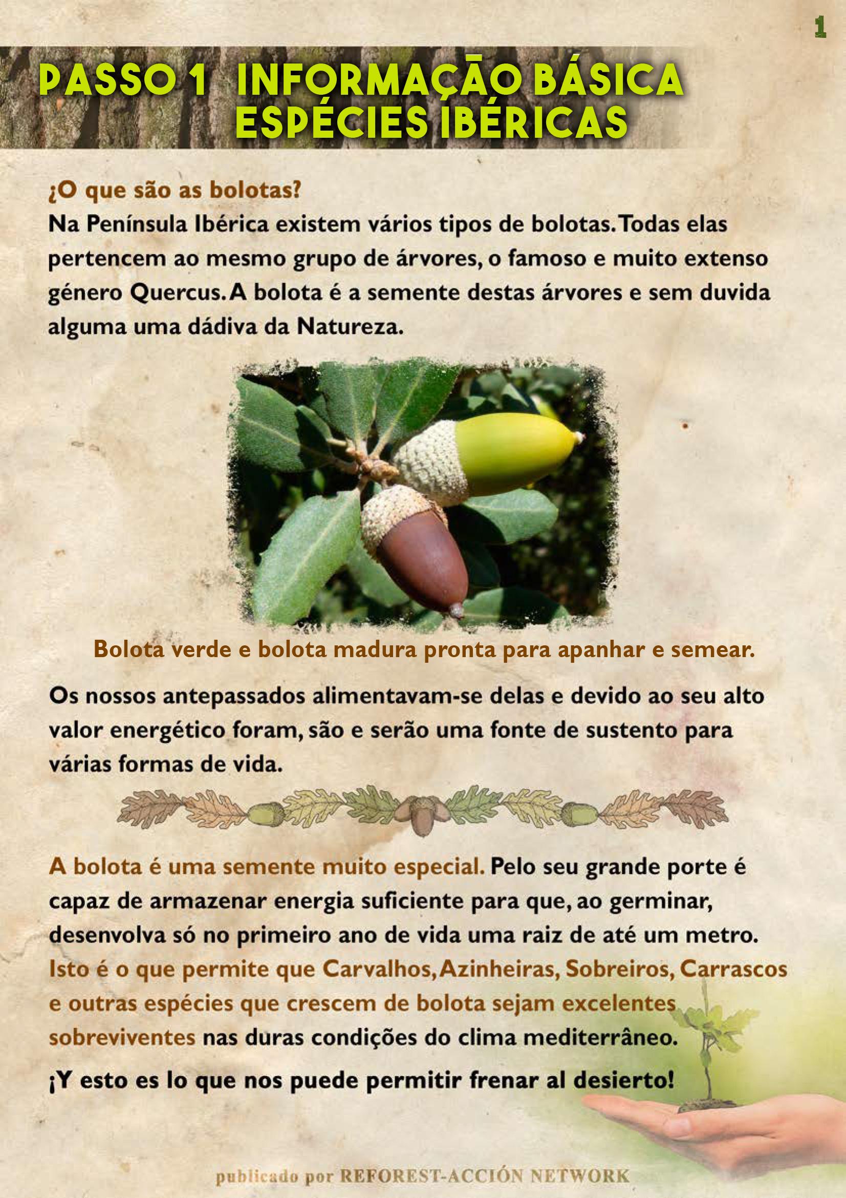 GUIA BELLOTERA - PAG 2 PT