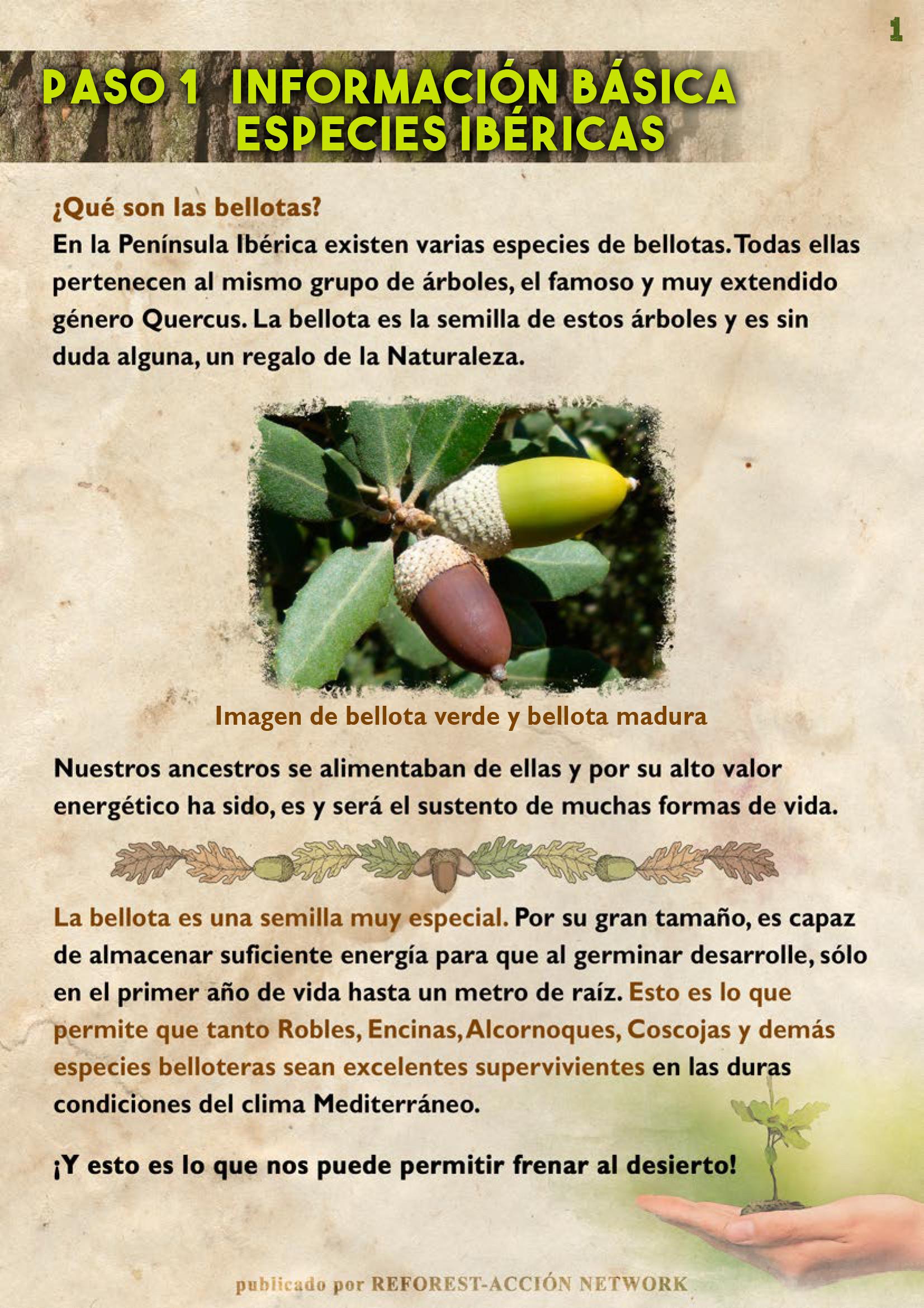GUIA BELLOTERA - PAG 2