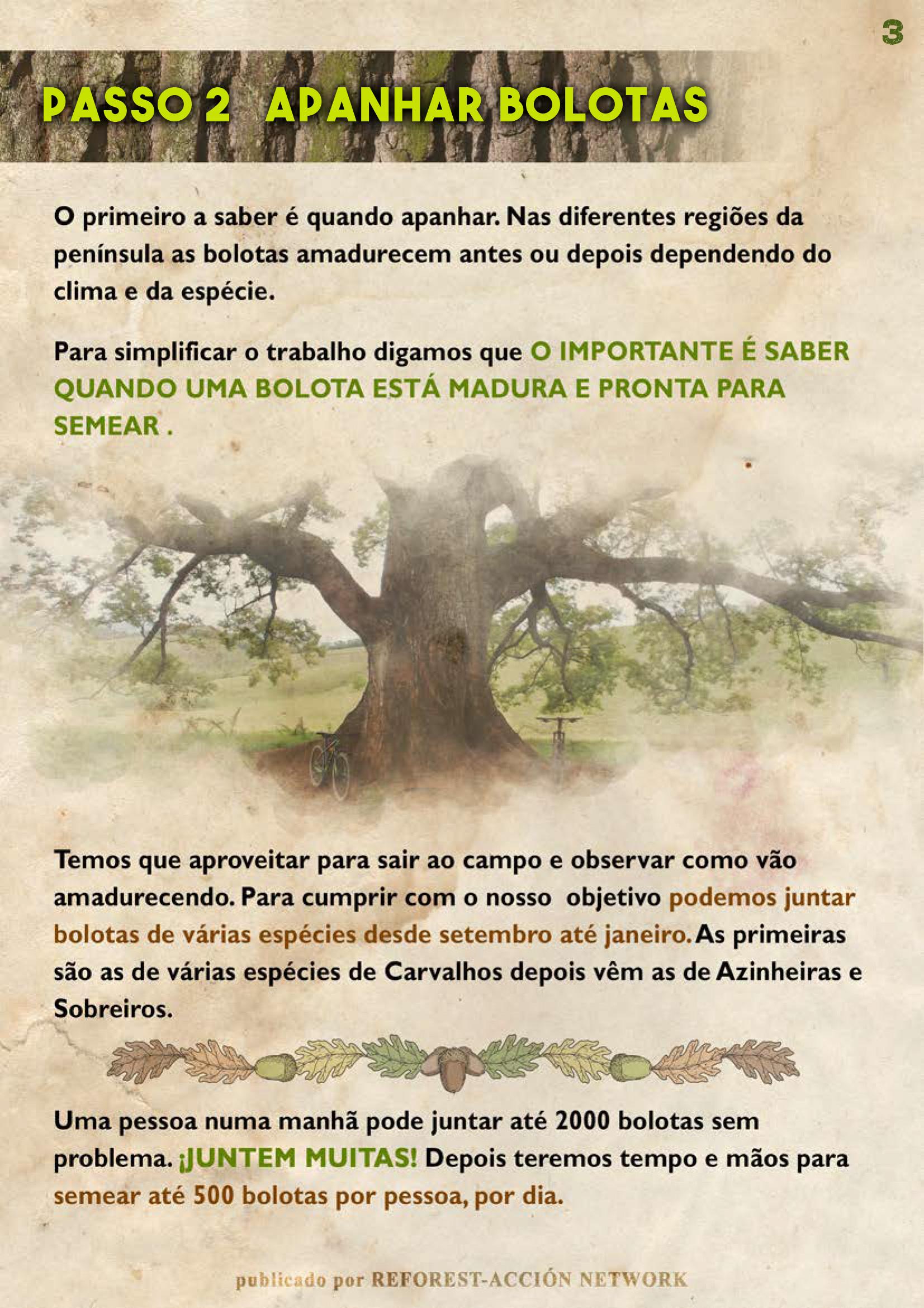GUIA BELLOTERA - PAG 4 PT