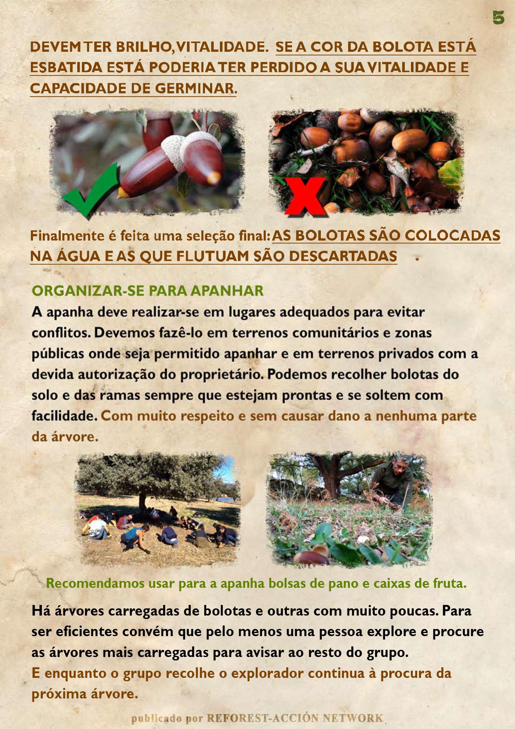 GUIA BELLOTERA - PAG 6 PT