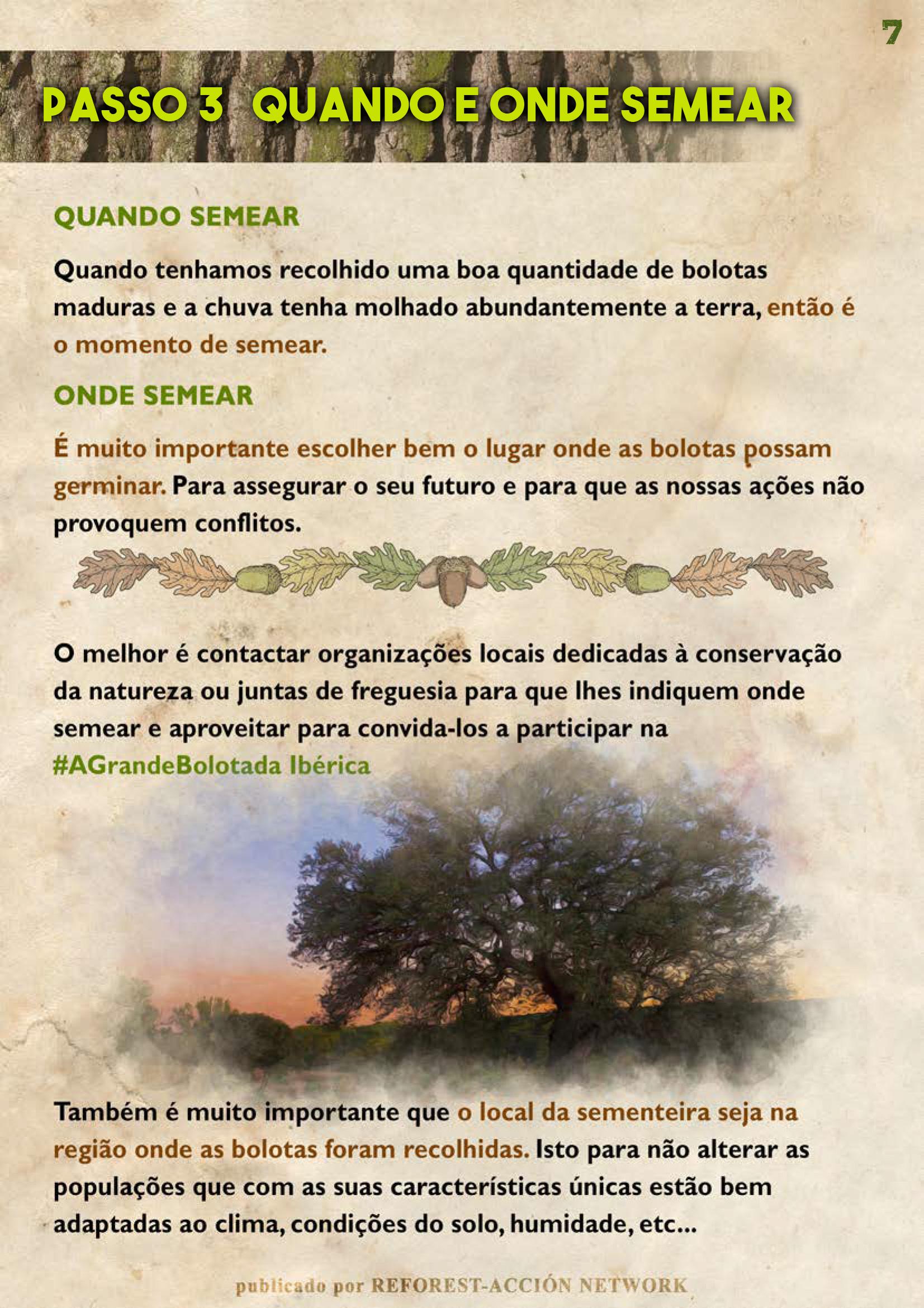 GUIA BELLOTERA - PAG 8 PT
